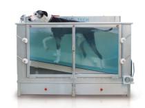 Das Unterwasserlaufband hat in der Hundephysiotherapie vielfältige Einsatzmöglichkeiten.