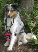 HundePhysioTherapie Dagmar Herb ist dre einzige Anbieter von Fit mit Hund in Worms und der weiteren Umgebung