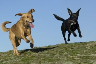 Hundephysiotherapie ist Krankengymnastik für Hunde und bedeutet mehr Lebensqualität durch Gesundheit & Wohlbefinden!
