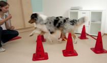 Bewegungstherapie und Gangschulung gehören in der hundephysiotherapeutischen Praxis von Dagmar Herb in Worms zum Alltag.