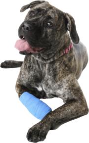 Der Behandlungsablauf in der hundephysiotherapeutischen Praxis von Dagmar Herb wird individuell auf jeden Hund abgestimmt.