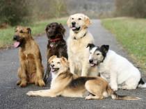Nehmen Sie doch unverbindlich Kontakt auf mit HundePhysioTherapie Dagmar Herb in Worms