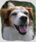 Das oberste Ziel der Hundephysiotherapie ist die Schmerzvorbeugung und Schmerzlinderung
