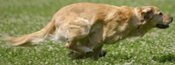 Dagmar Herb besitzt die Ausbildung zur tierärztlich und hundephysiotherapeutisch geprüften Hundephysiotherapeutin / Hundekrankengymnastin nach Blümchen/ Woßlick