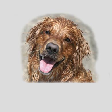 Ihre Praxis für Hundephysiotherapie, Hundekrankengymnastik und Fit mit Hund Kurse in Worms