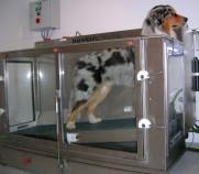 Hundephysiotherapeutische Behandlung auf dem schrägen Unterwasserlaufband zur Muskelkräftigung