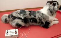 Elektrotherapie bei der hundephysiotherapeutischen Behandlung.